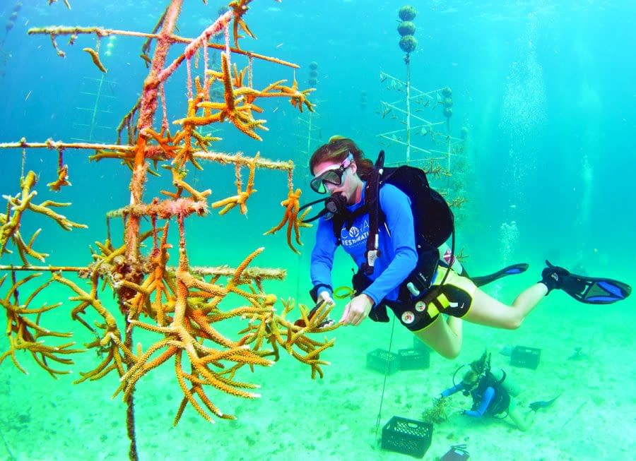 Florida Keys visitors offered new ways to 'Connect & Protect' the island chain