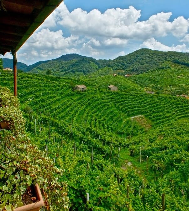 A Culinary Tour of Northern Veneto.
