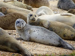 An Adventure Closer to Home with the Seals of Blakeney Point.