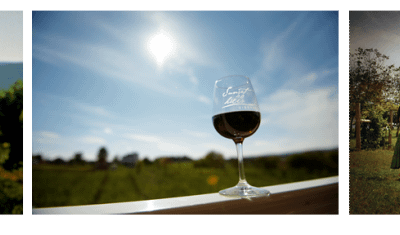 Discover Washington D.C.'s Wine Country