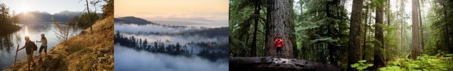 Forest-Bathing in British Columbia