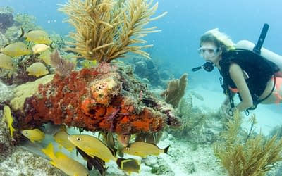 Five Top Dives in the Florida Keys National Marine Sanctuary